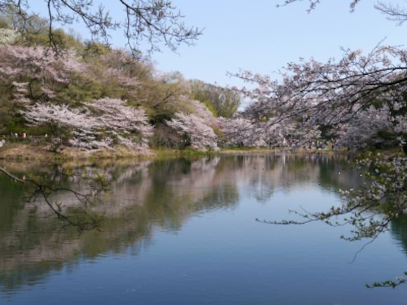 その名のとおり、園内には3つの池(上の池、中の池、下の池)がある三ツ池公園(2014年4月5日撮影)