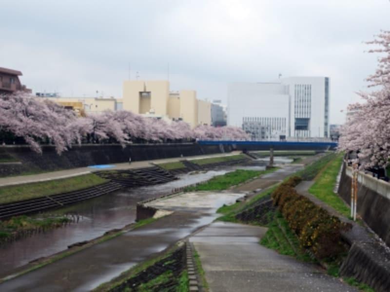 JR戸塚駅~大船駅の柏尾川沿いに続く、柏尾川プロムナード(2013年3月27日撮影)