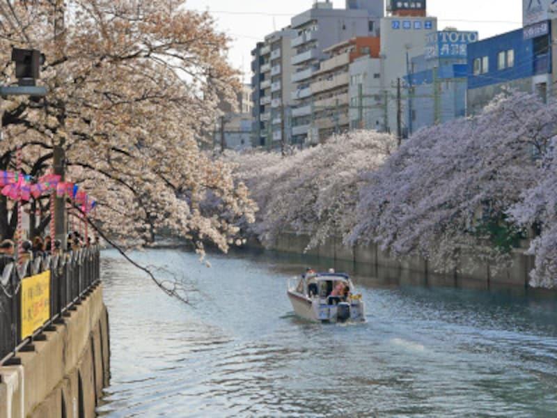約500本の桜並木が続く、大岡川プロムナード(2018年3月30日撮影)