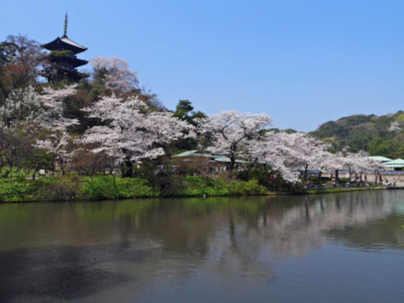 ソメイヨシノを中心にさまざまな花が楽しめる、春の三溪園(2018年3月28日撮影)