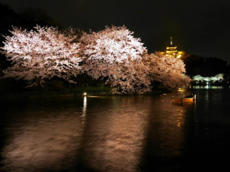 三溪園の夜桜ライトアップの様子(2017年4月8日撮影)