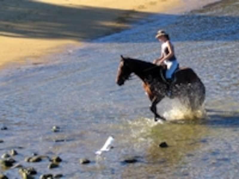 川や海の浅瀬も進んでいく乗馬