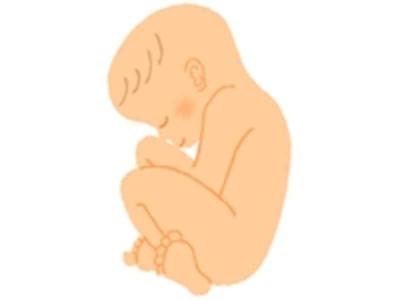 妊娠10ヶ月の胎児