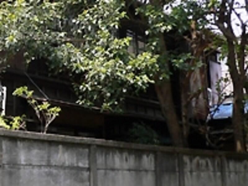 住宅地の樹木