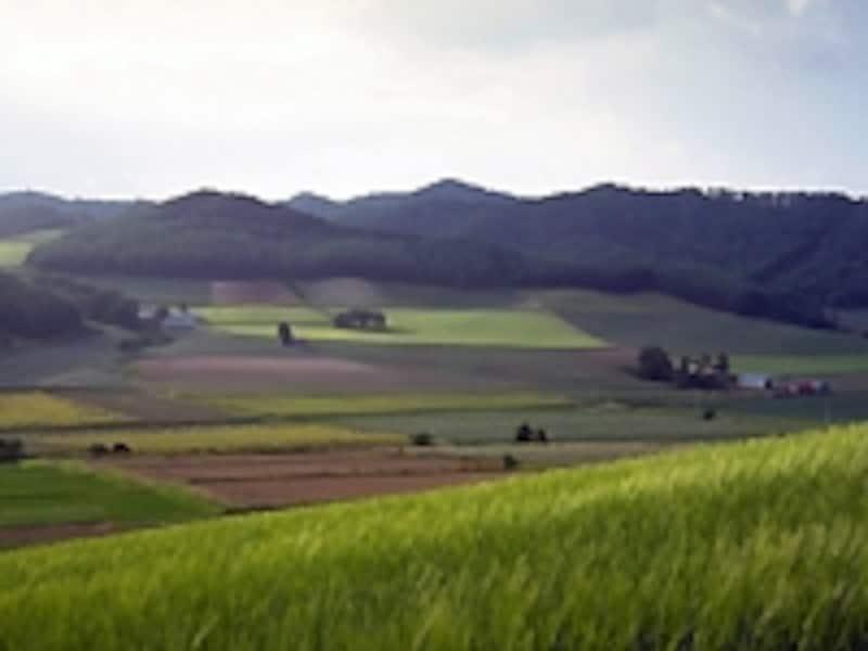 田園地帯の風景
