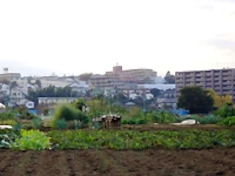 都市区域の田畑