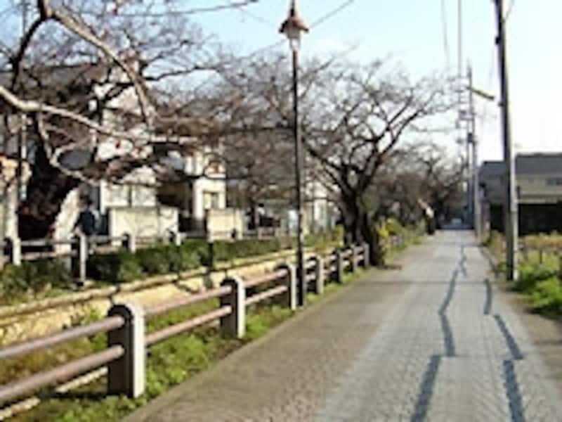 川沿いの道路