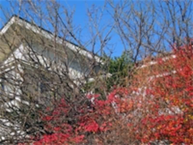 木に囲まれた家の外観