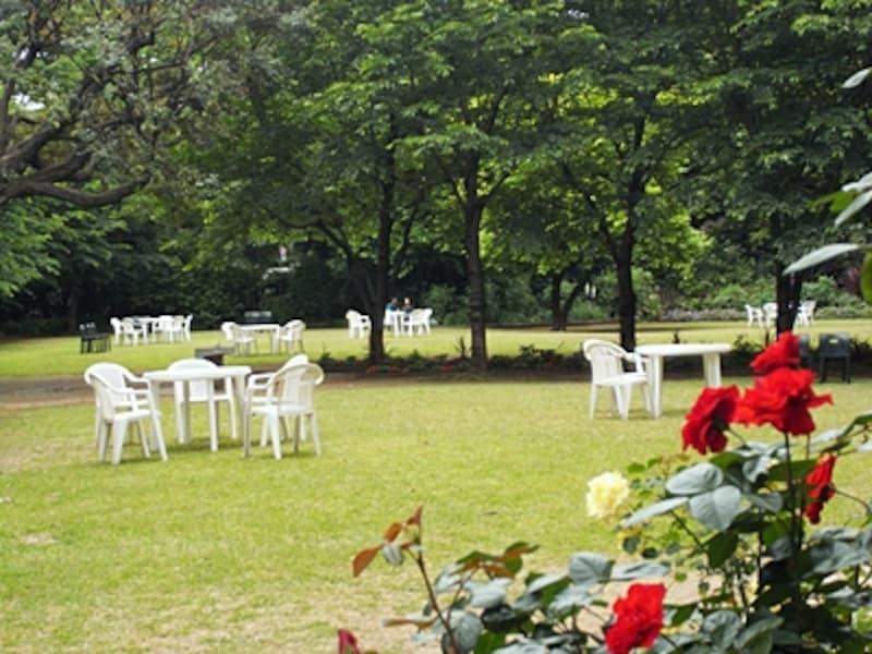 光と緑にあふれている庭園美術館、芝生の広場
