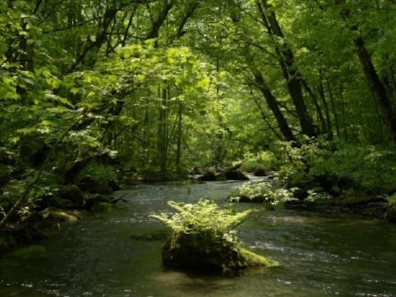 新緑がまぶしい頃の「奥入瀬渓流」。あまりの美しさに涙を流してしまう人も