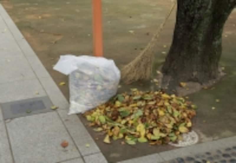 落ち葉掃きなどの日々の清掃作業も大切です