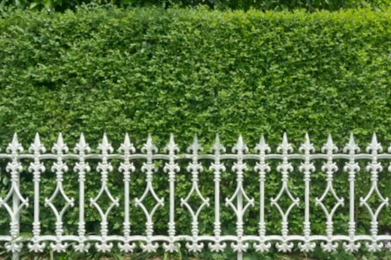 中の様子が見えない茂った生垣がある家は要注意