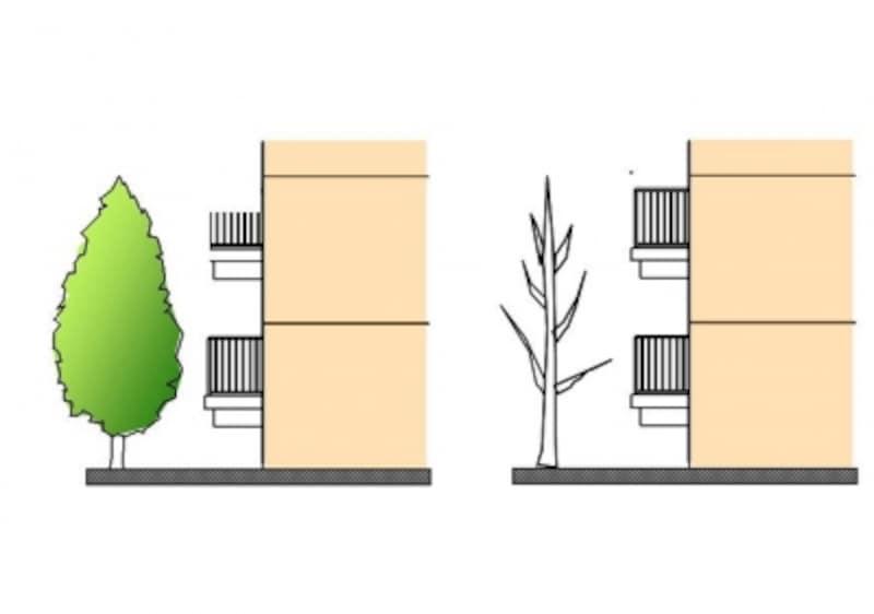 南側に落葉樹が植わっていると、夏は茂った葉が日射を防ぎ、冬は葉が落ちて暖かい日ざしを受けることができる