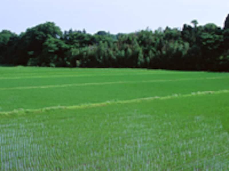 最近注目される「農業への転職」ノウハウを紹介します。
