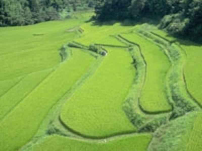 秀吉、山間の村へ出かけて薪の分割納入を交渉する