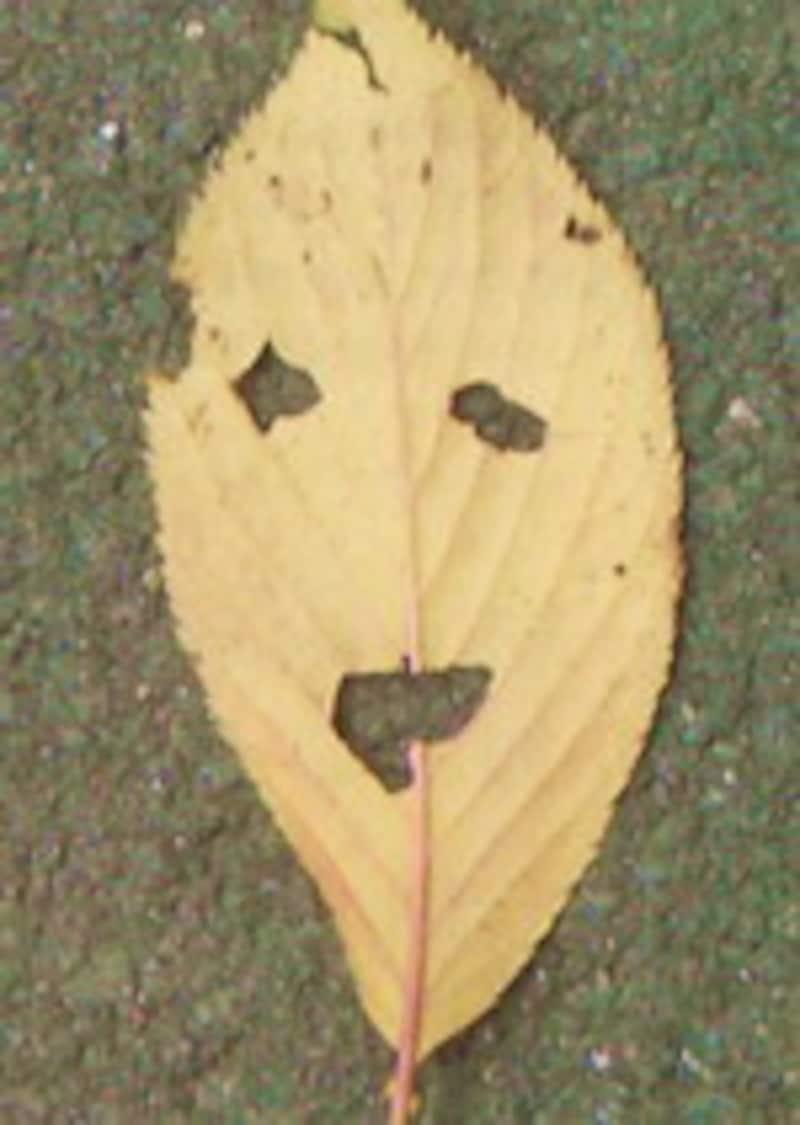 小学校2年生の女の子が撮った写真。この葉っぱを撮りたいと思った彼女の気持ちは?