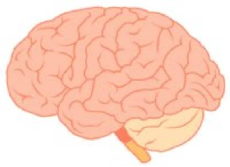 脳幹は生命を維持するのに必要な部分