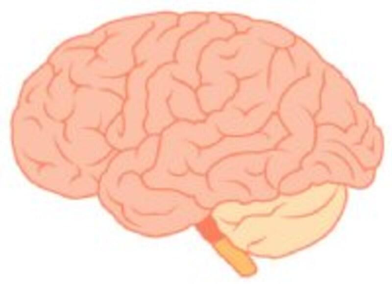 クモ膜は脳を包む膜の一種です。