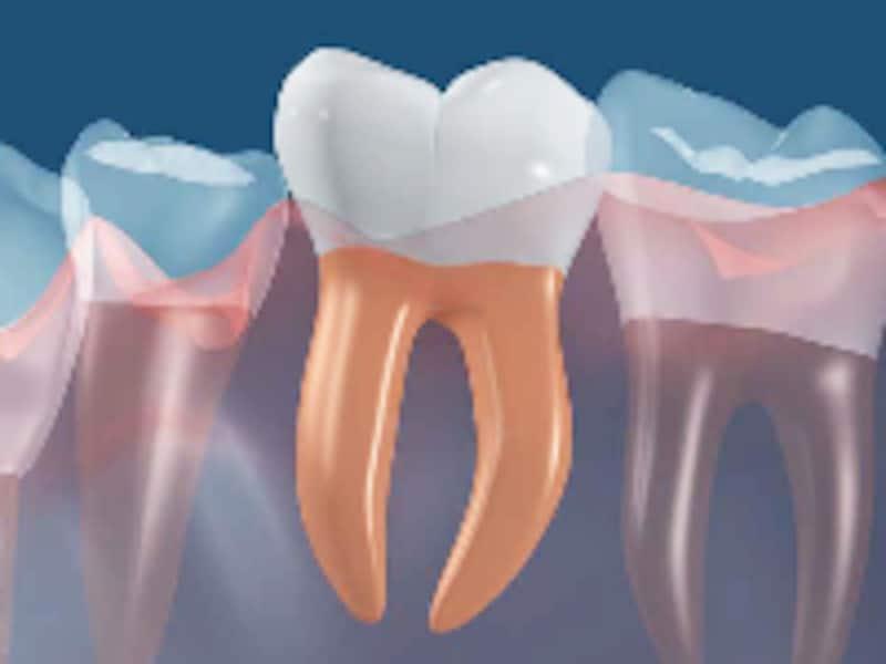 歯の生え方