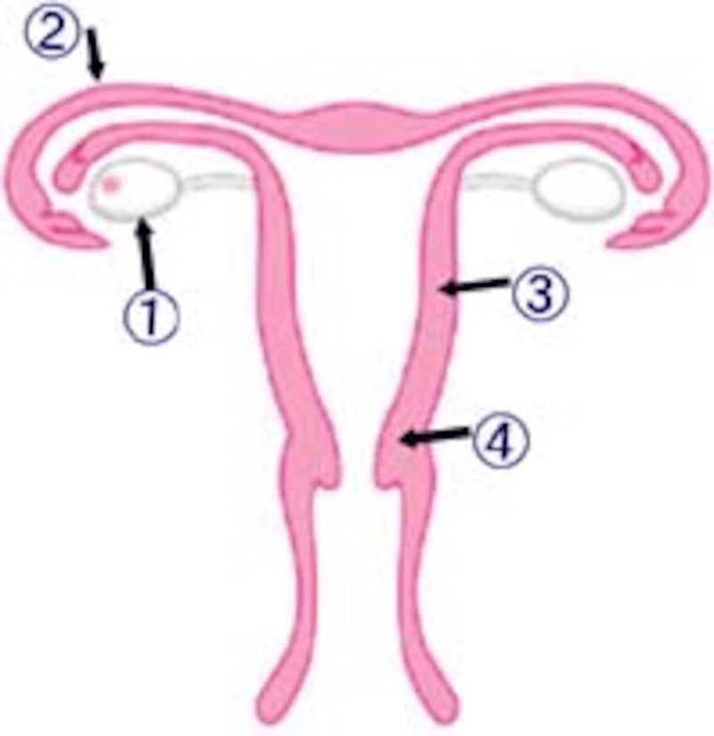 受精~着床・妊娠のしくみを理解しましょう!