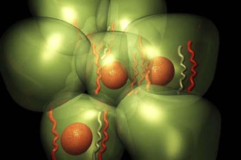 子宮体がんと頚がんの違いは場所だけじゃなく細胞の種類も違う!