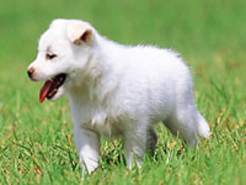 甘くてカロリーの低いものに小さな頃から親しんでしまうと、体は『甘いものは太らない』と覚えてしまう…パブロフの犬状態?!