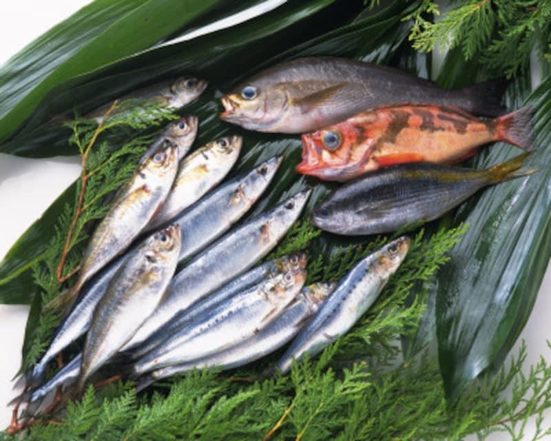 魚アレルギーを起こす魚とアレルギー様反応を起こす魚は共通しています