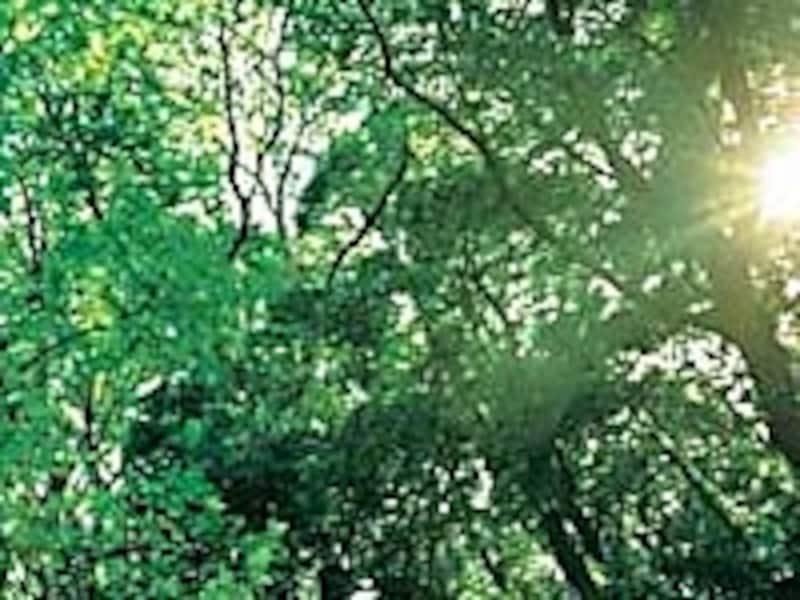 フォートンヒルズ内の森