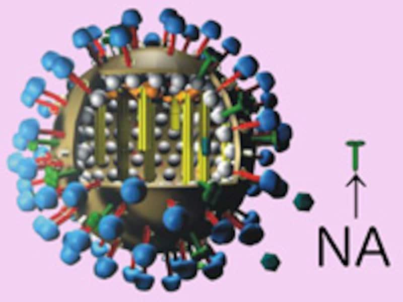 """influenza_virus_color"""""""