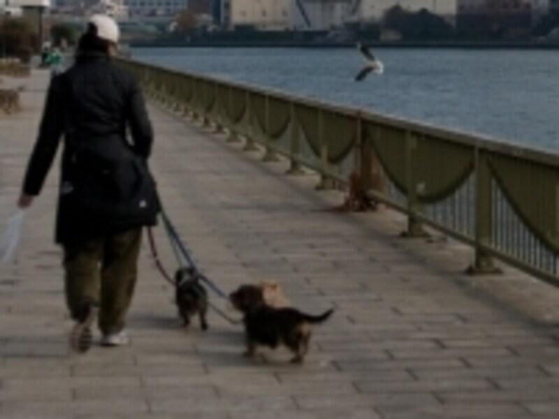 犬の散歩を毎日行うことも運動習慣の一つです。