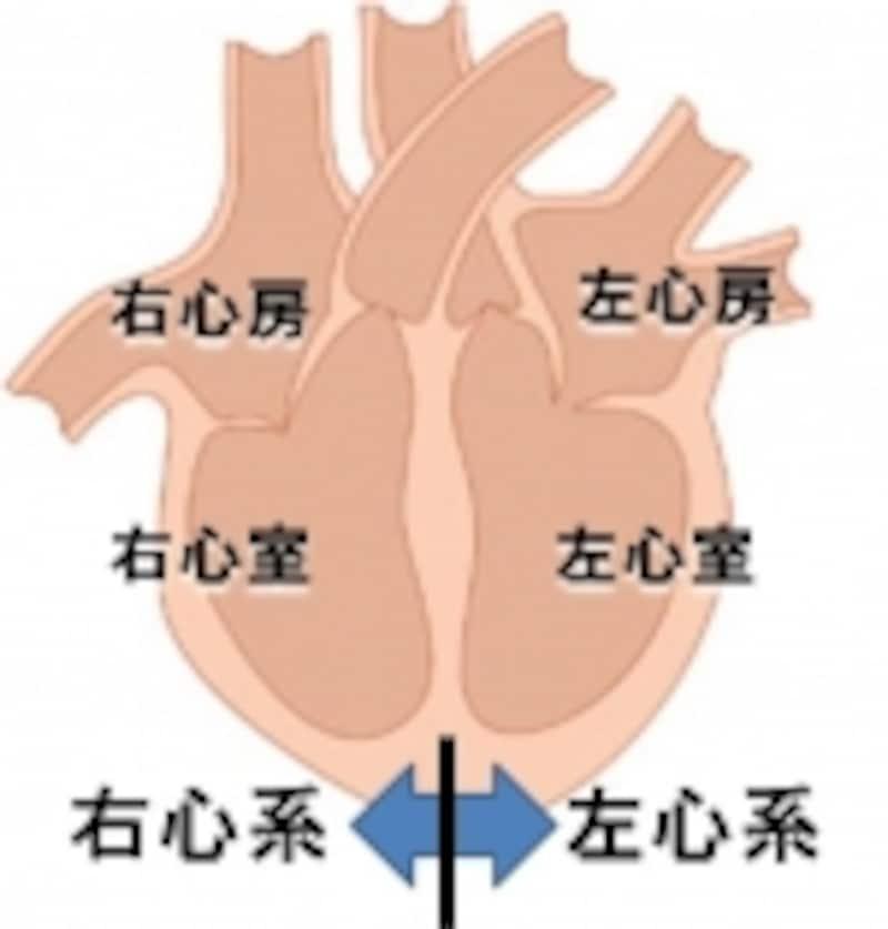 心不全には左心不全と右心不全があります。重症では両方が合わさった両心不全もあります。