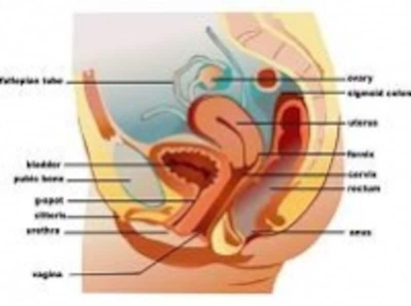 骨盤の底には、子宮・膀胱・直腸などの臓器があります