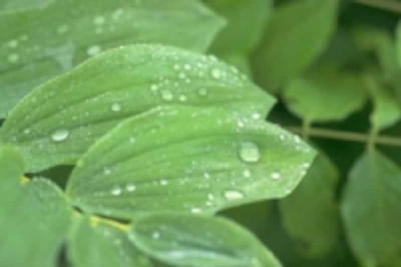 梅雨時期は、肩こり・腰痛・関節痛に悩む人が多くなります