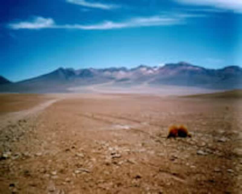 砂漠を歩いていると蜃気楼が現れることがありますが、もしも日常生活であるはずのないものが見えたら錯覚か幻覚かの区別が重要です