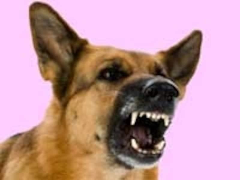 犬などの動物にかまれることで感染する狂犬病。海外では注意が必要です