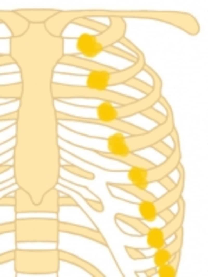 このように肋骨の部分にこぶができて、念珠のようになっています