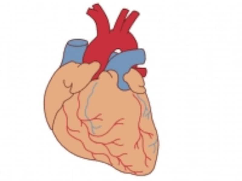 心臓の周りの赤い血管が動脈で、冠動脈と言います