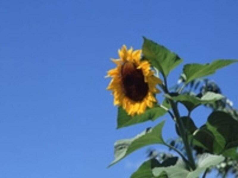 真夏の屋外レジャーは熱中症の危険と隣り合わせ……しっかり予防しましょう!
