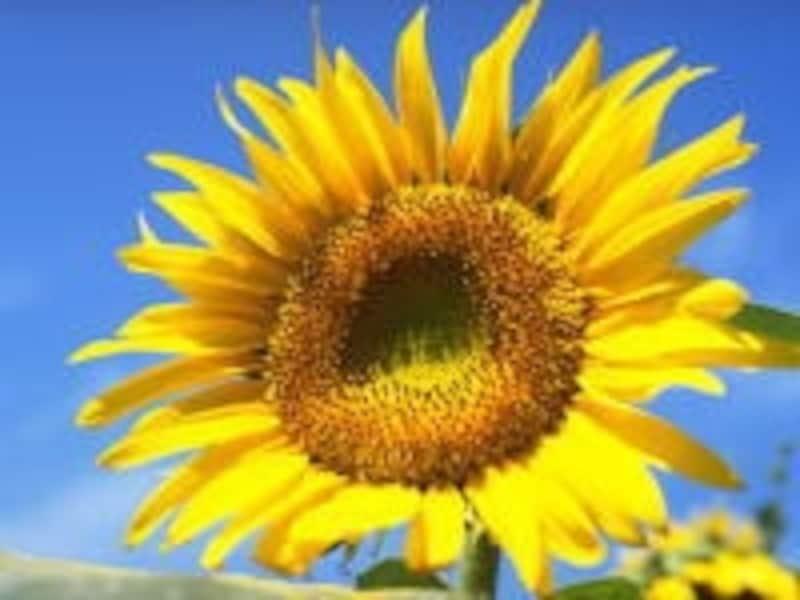 夏は暑い日差しだけでなく、クーラーの効きすぎにもご用心!