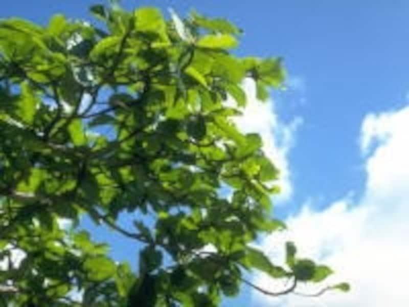 春は肝、夏は心、梅雨は脾……。季節ごとに強化したい五臓も変化する