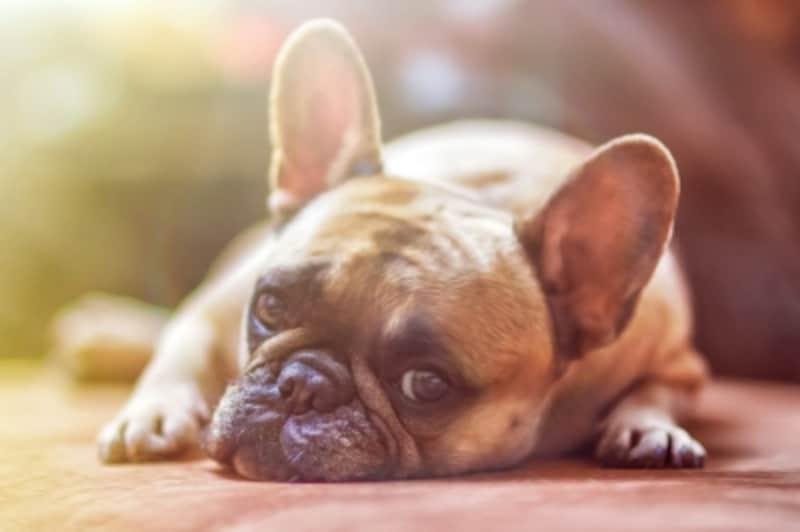 耳の様子で愛犬のきもちがわかる?