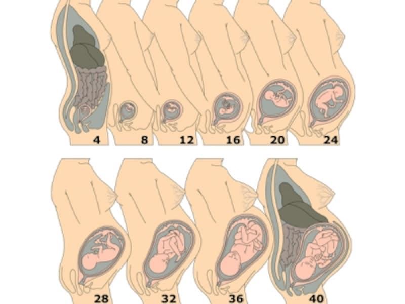大き 赤ちゃん 20 さ 週