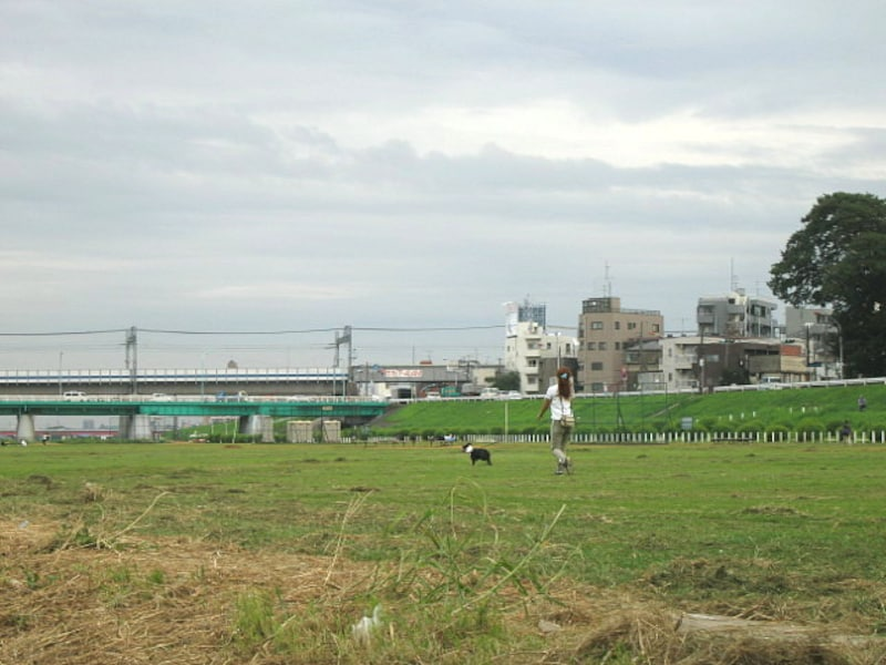 多摩川の川原