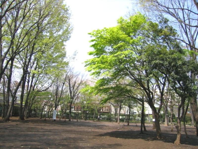 目黒中央緑地公園