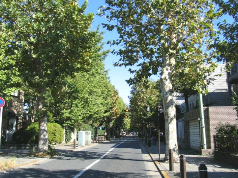 成城の並木