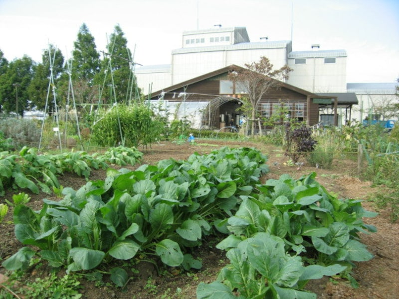 JAつくば市の農園