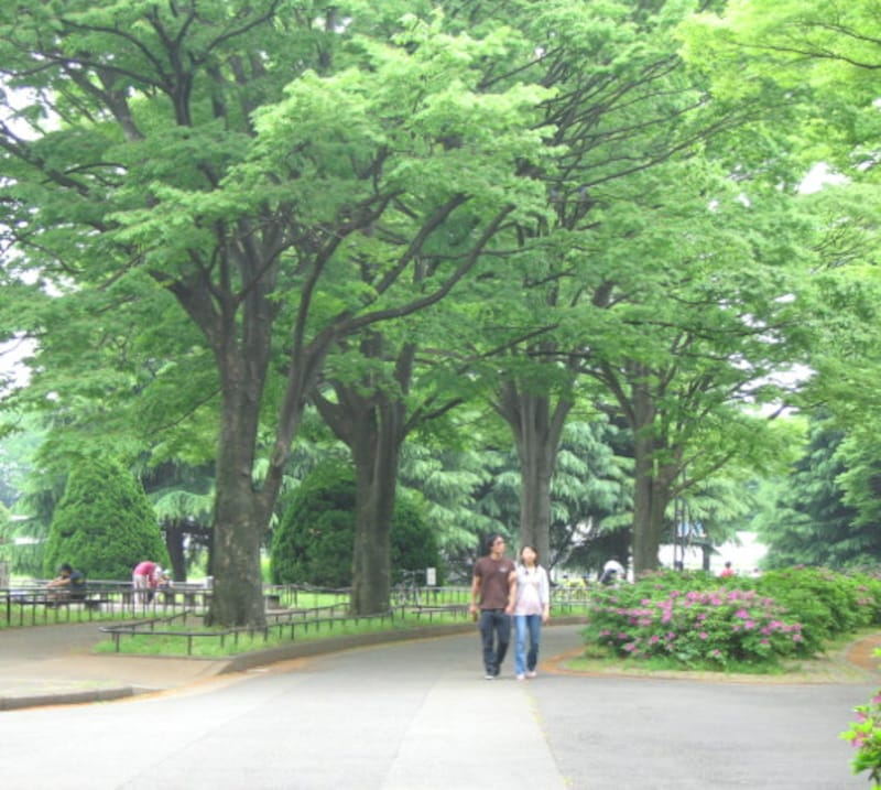 駒沢公園イメージ