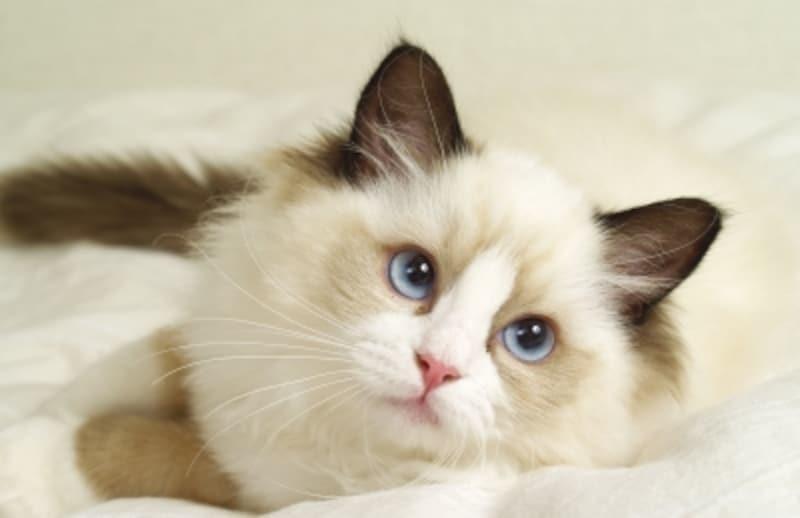 猫との甘い生活