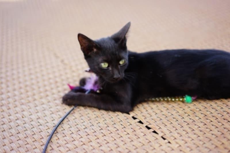 黒猫は穏やかで頭の良い子が多い