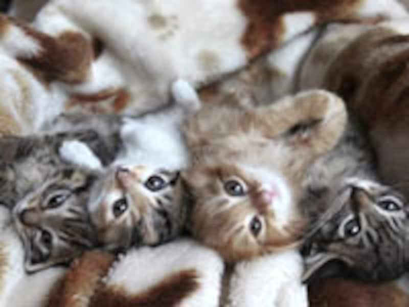 兄弟で生まれても、様々な個性を持つ猫